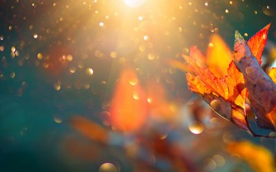 Boost up your immune system for Fall